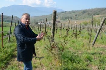 テッラディブリガンティのロメオ氏とビオデナミ農法のブドウ畑