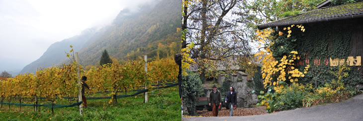シュタッハルブルグの傾斜に面した葡萄畑と古城を活用したワイナリー