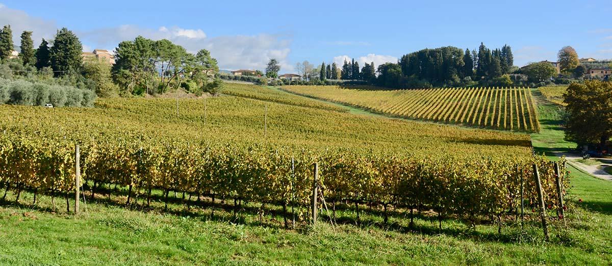 テヌータレンツィーニのすり鉢状の畑