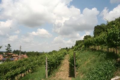 白ワインの名産地 フリウリヴェネツィアジューリアの生産者、ヴォスカ